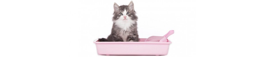 Cat Litter & Related Products
